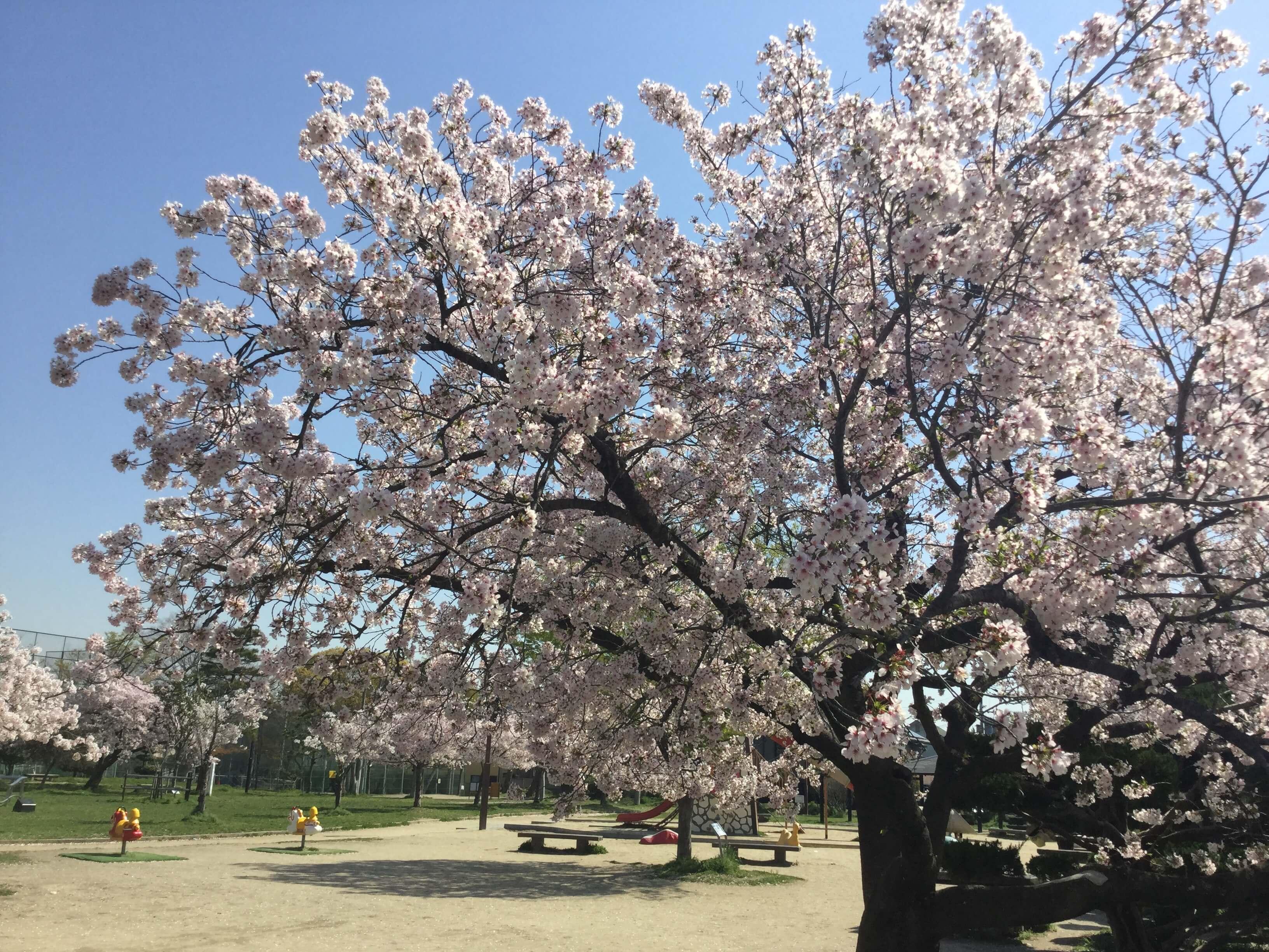 【高槻の花見スポット】城跡公園は遊具が豊富。子ども達が存分に遊べる場所です。